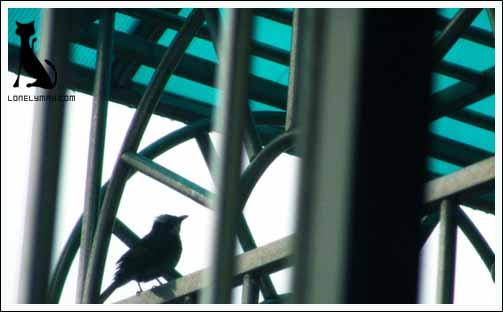 http://www.lonelymay.com/wjrblog/attachments/month_200503/26_115025_oldsDSC01928.jpg