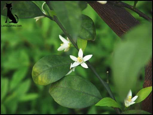 http://www.lonelymay.com/wjrblog/attachments/month_200504/26_201217_vskyDSC02007.jpg
